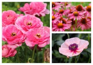 Photo collage showing different types of Pink flowers.