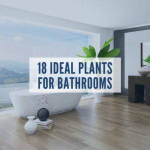 18 indoor plants that look great and grow well in bathrooms