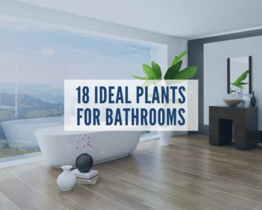 18 indoor plants that look great and grow well in bathrooms