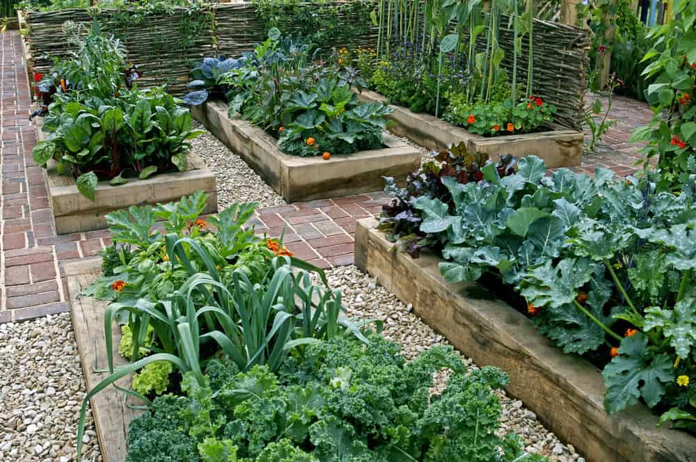 How to Increase Your Vegetable Garden Yield (7 Steps)