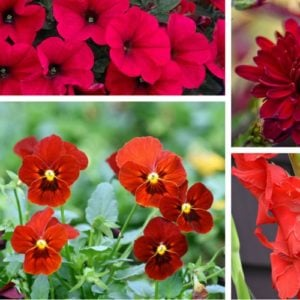 Collection of red flowers