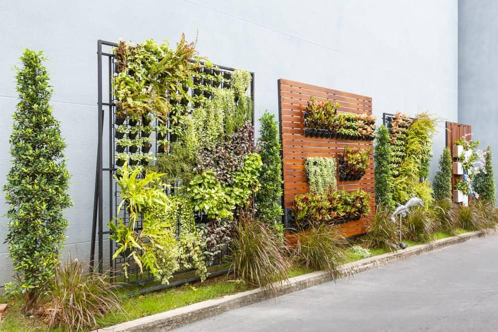 Vertical gardens for backyard privacy
