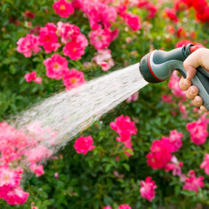 Garden hose watering beautiful flower garden