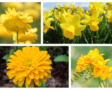 Some of the most popular yellow flowers.