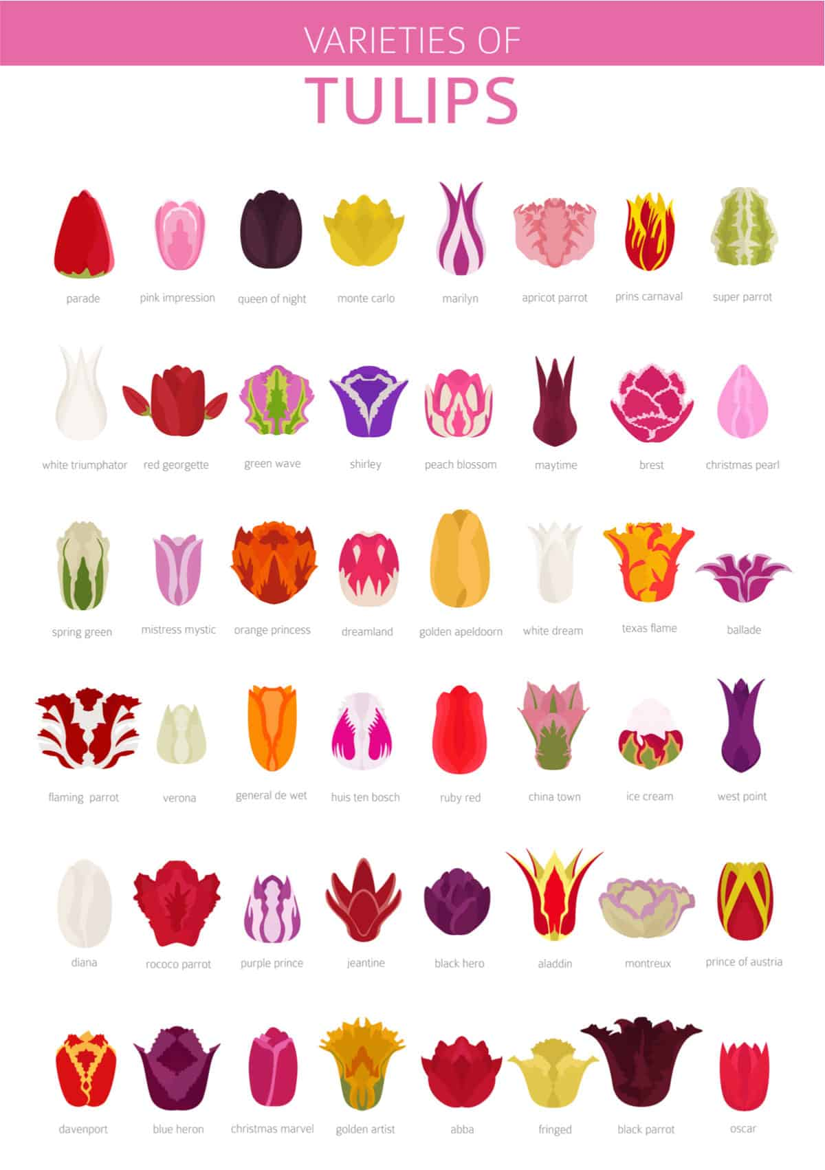 Chart setting out the different tulip types and varieties