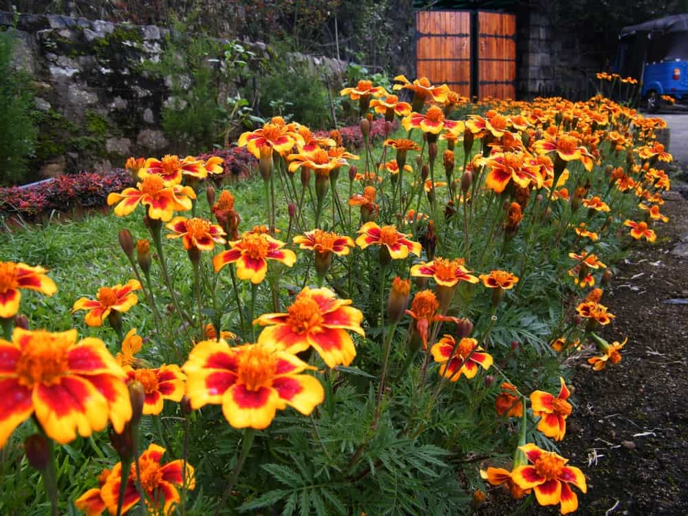 Use annual flowers and foliage.