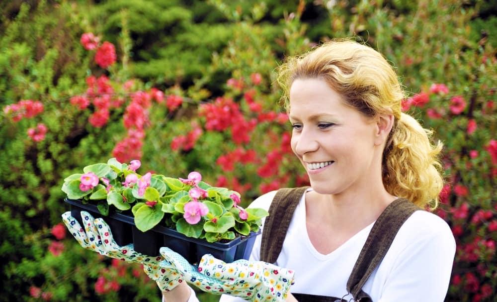 Breeding begonias