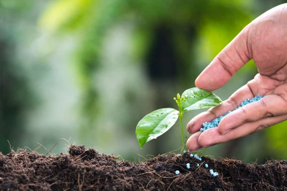 Fertilize regularly.