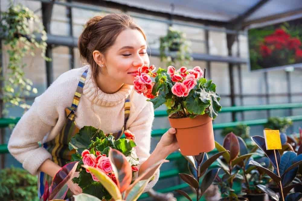 Health benefits of begonias
