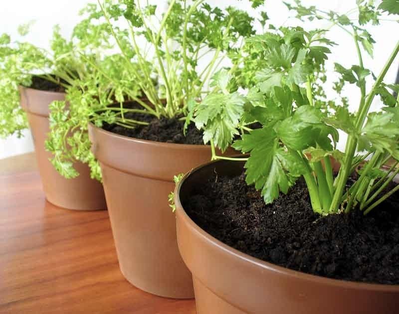 Plants growing on pots.