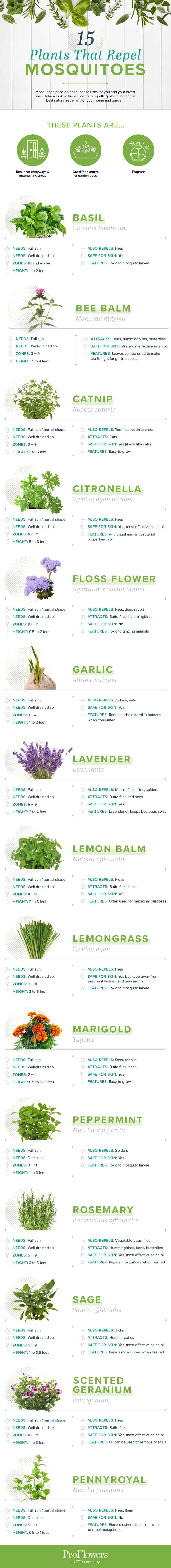 Chart setting out 15 plants that repel mosquitoes