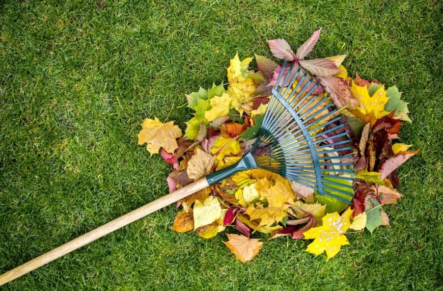 Raking up leaves in the backyard