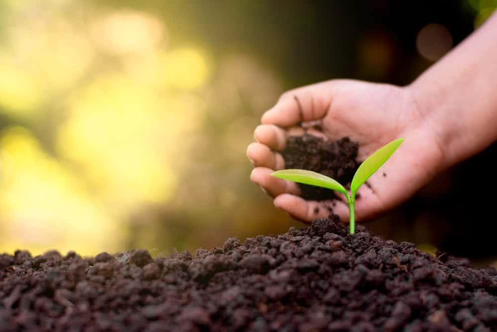 Choose the right soil.