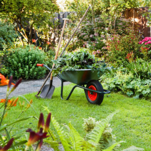 Wheelbarrow in the yard with beautiful gardens