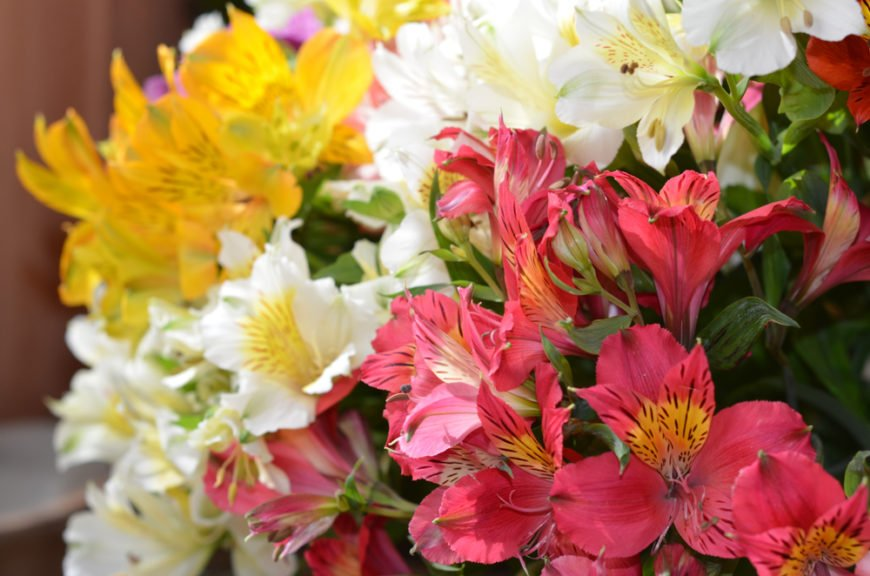 32 Different Types Of Alstroemeria Flowers