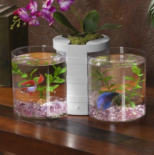 Betta fish tank.