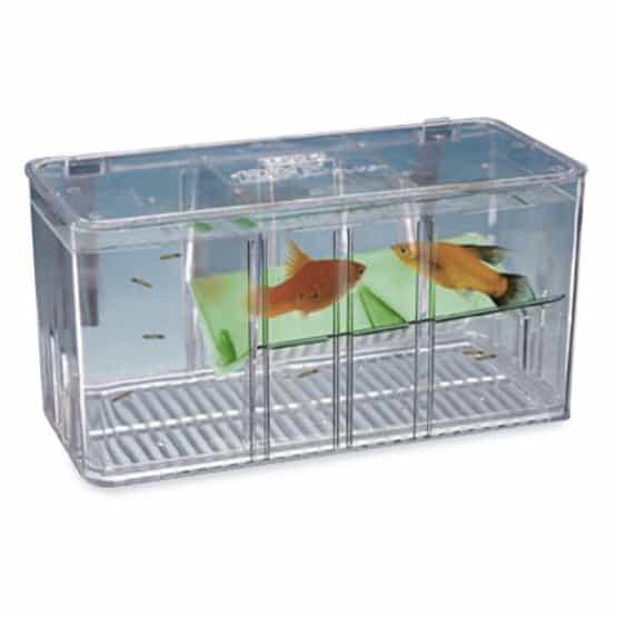 Breeder fish tank.