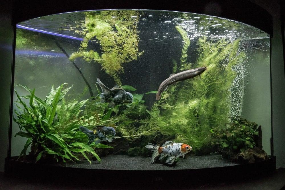 Cold water aquarium