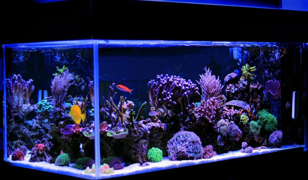 Marine salt water aquarium