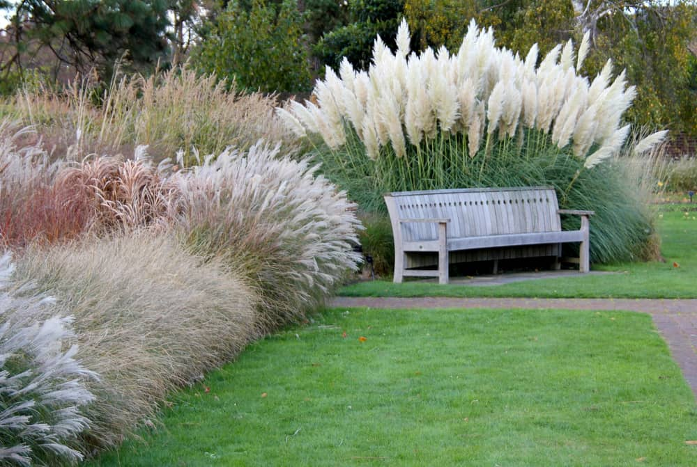 Different ornamental grasses in a park.