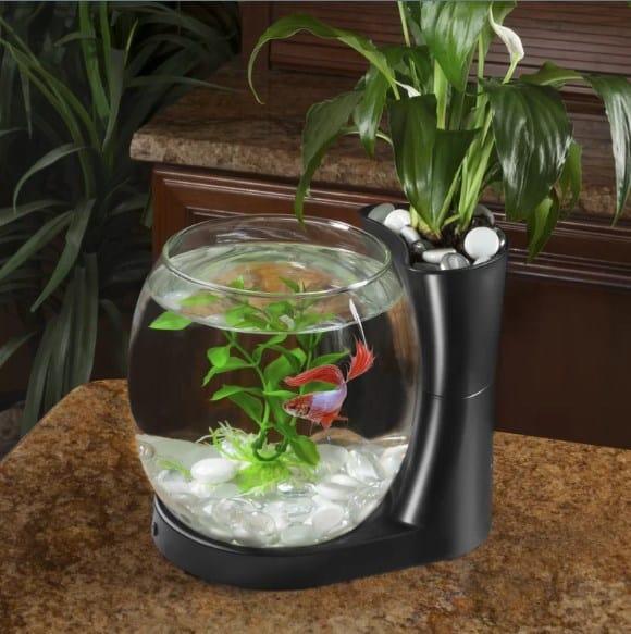 Planter fish tank.