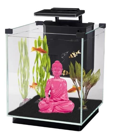 Square fish tank.