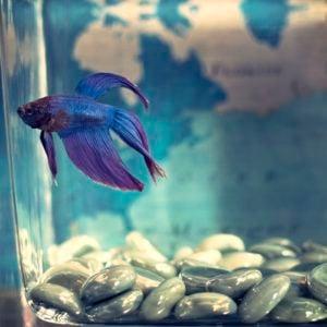 Types of fish tanks.