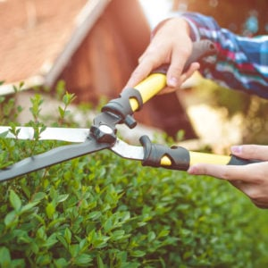 A gardening shear in action.