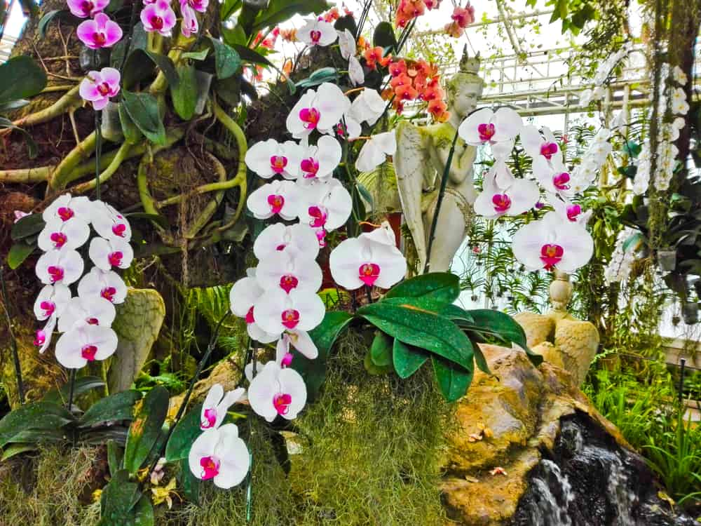 A close up of orchids in a garden.