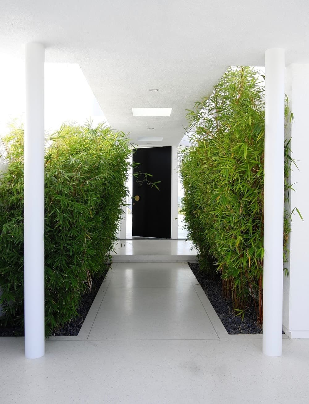 The home's entrance is surrounded by green and healthy plants. Photo Credit: Gerhard Heusch