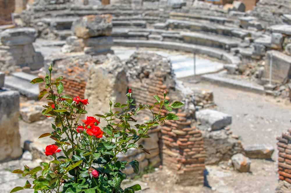 Rose bush in an ancient town of Greece.