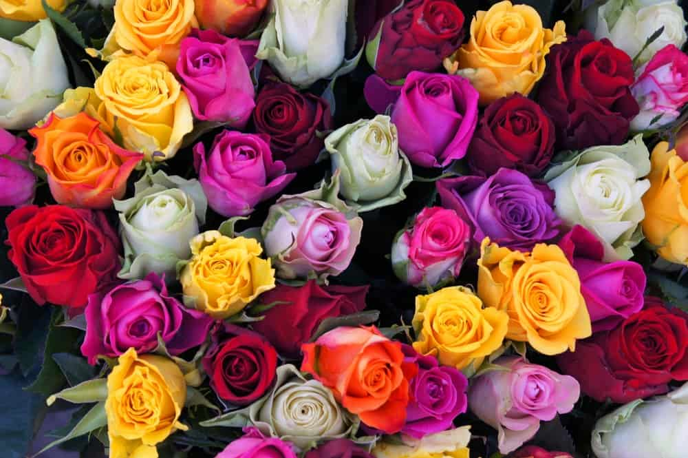 A bouquet of roses in different colors.