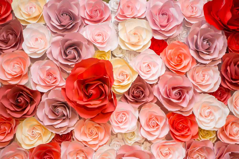 Roses in red, white, yellow and peach colors.