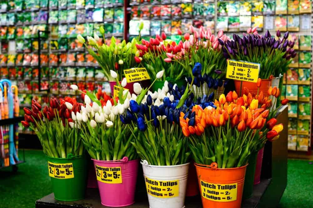 Colorful beautiful fresh tulips for sale on the market in Amsterdam, The Netherlands.
