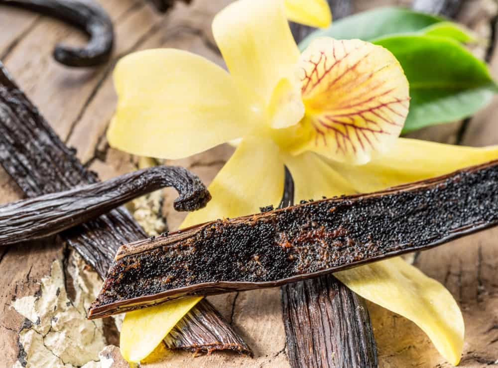 Beautiful yellow vanilla orchid with vanilla seed pods laying on a wooden table