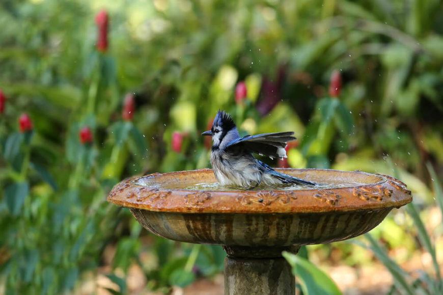 A wet bird enjoying its bath on a bird bath.