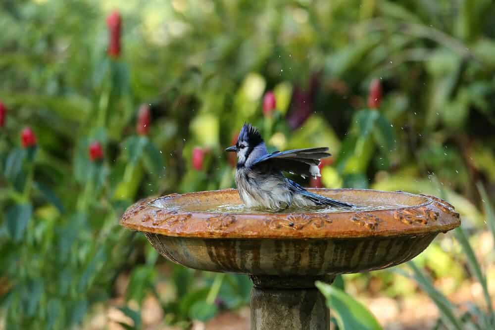 A wet bird enjoying its bath on a bird bath.