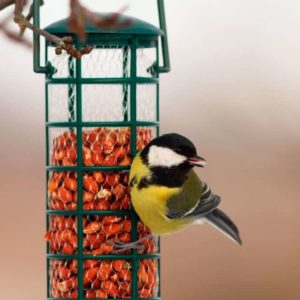 A small bird on a green, metal feeder.