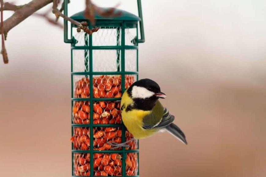 24 Different Types Of Bird Feeders
