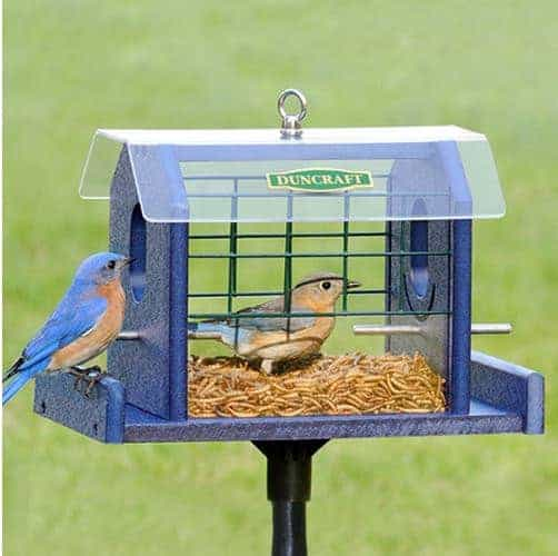 A blue bird feeder, designed to keep the birds safe and sound.