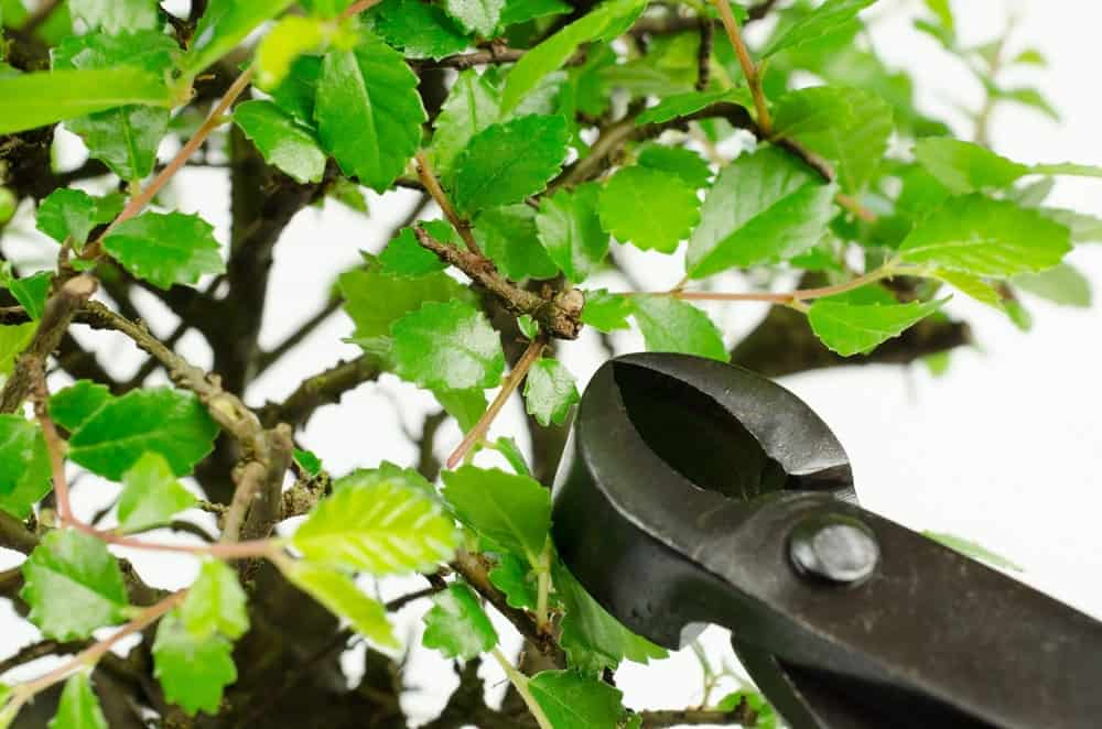 A concave branch cutter is being used to trim a tree branch.