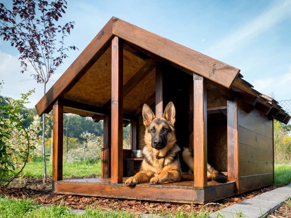 An outdoor dog sits on guard in his wooden pitched roof dog house.