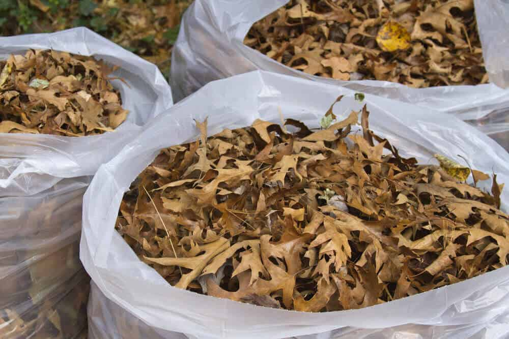 Sacks of dried leaves as alternative to mulch.