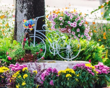 A garden with lots of flowers and an old, white bicycle used as a decoration.