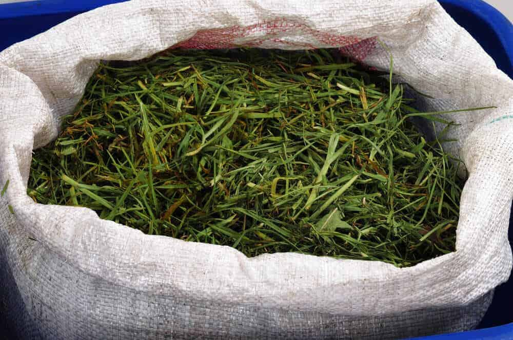 A sack of grass clippings.