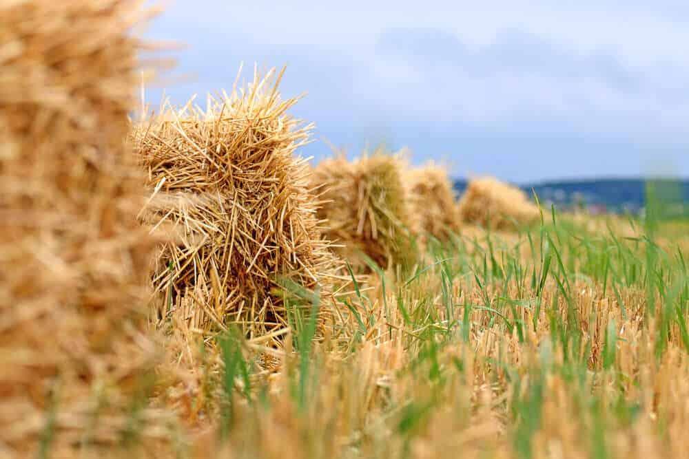 A field full of hays.