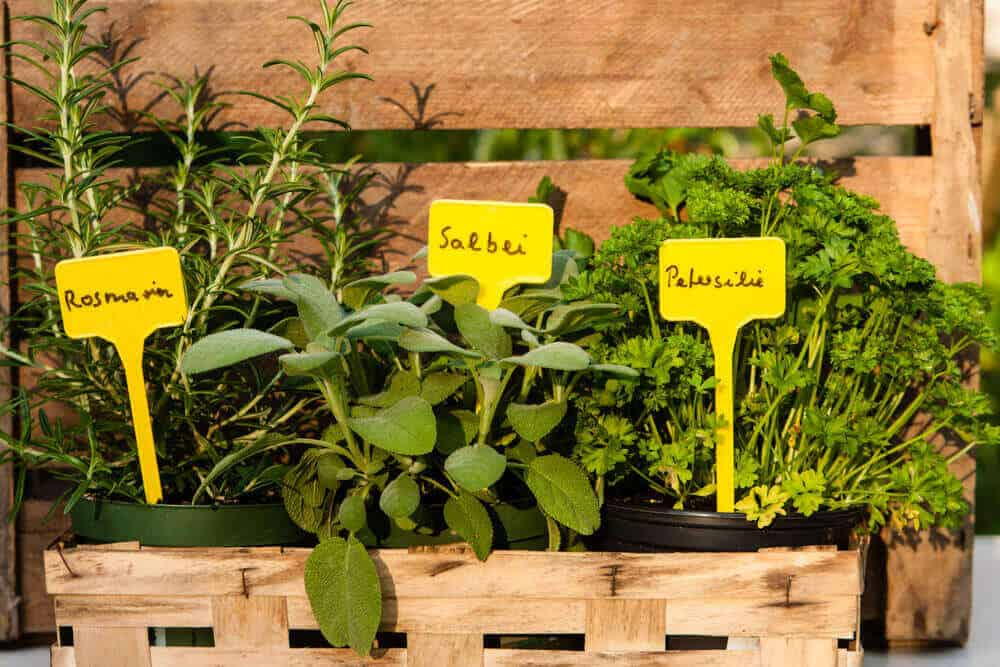 Herb garden with labelled herbs and spices.