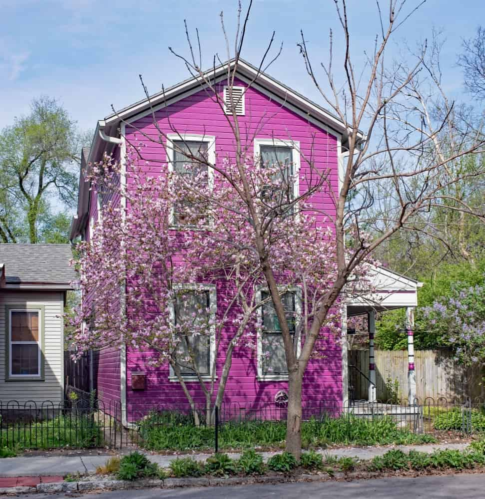 White trims add contrast and are used to set off the windows in this vibrant purple house.