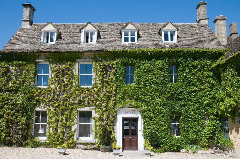 Close up of old home with extensive, thick ivy. This photo shows you just how thick ivy can get.