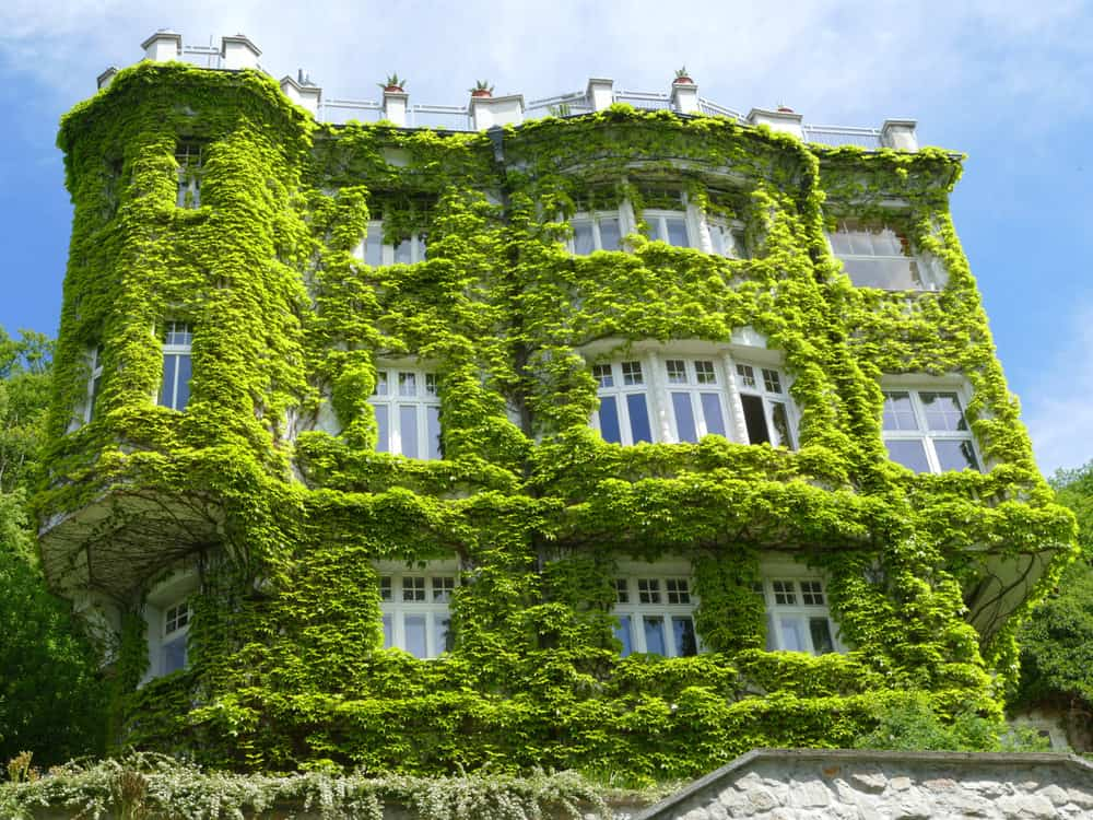 Old manor home covered in lush ivy... looks like green fluff as it grows thicker and thicker. Very eclectic look.
